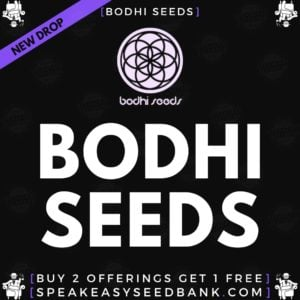 Bodhi Seeds | Buy Any 2 Get 1 Bonus Gift Free (Bonus Gift Automatically Added To Your Cart Upon Qualification)
