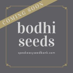 Bodhi Seeds Collection
