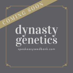 Dynasty Genetics Collection
