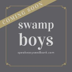 Swamp Boys Collection